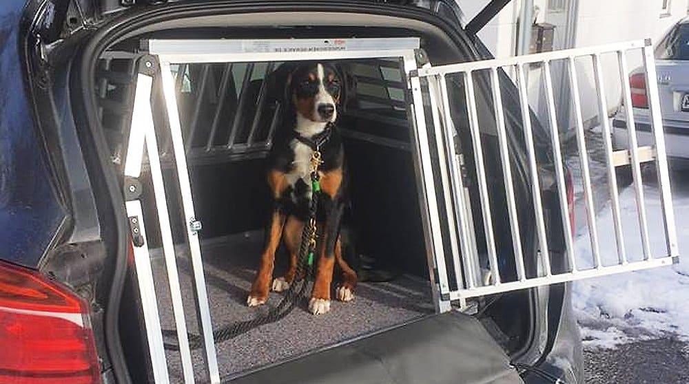 Hundetransportbox - Sicherheit für Ihren Hund
